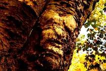 Demonic Tree – story of a major rewrite