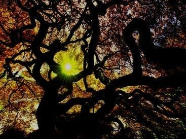 Urban fantasy novel - Tree